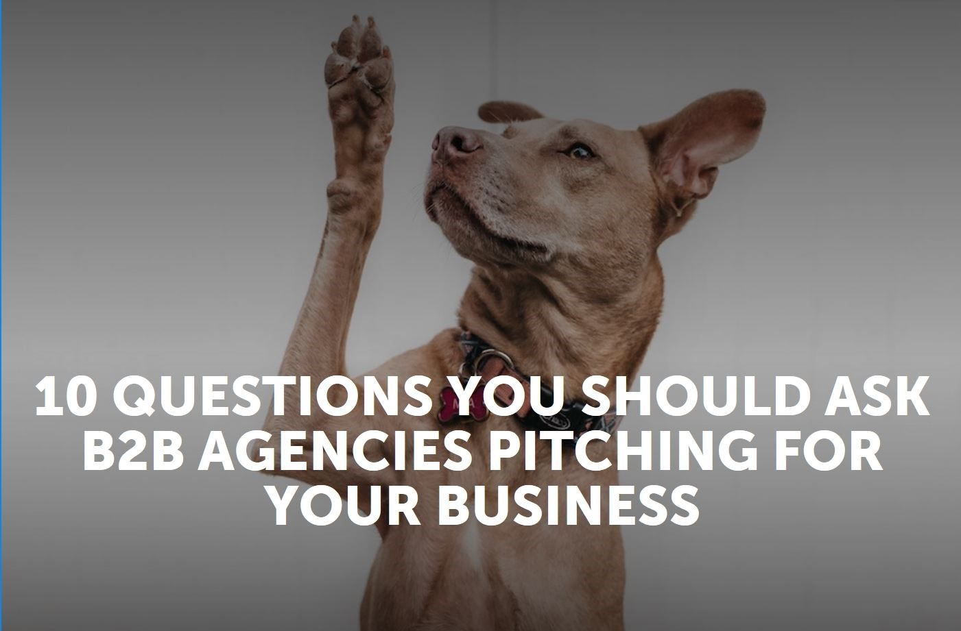 10 questions you should ask B2B agencies pitching for your business